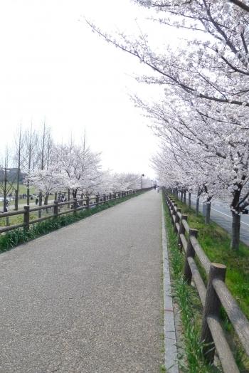 neyagawa.mypl.net