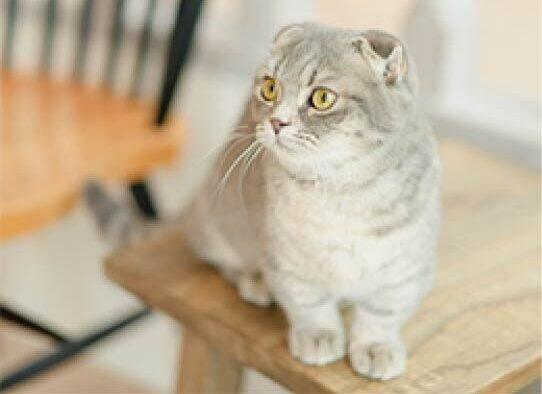 都内で会える猫ちゃん!オススメ猫カフェ6選♡猫ちゃんたちと一息つきませんか?